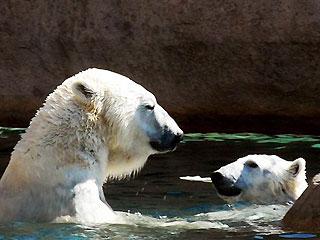 Photo by AP/Milwaukee Zoo