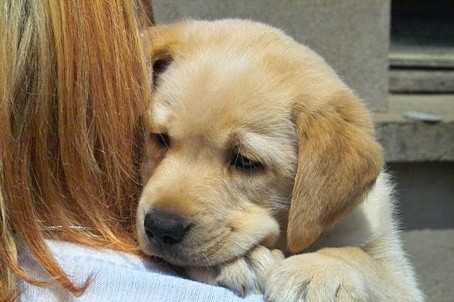 Il noleggio di cani