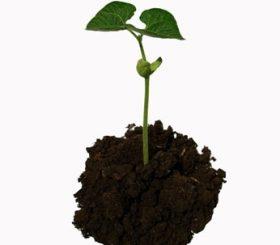 Il noleggio fa crescere l'agricoltura