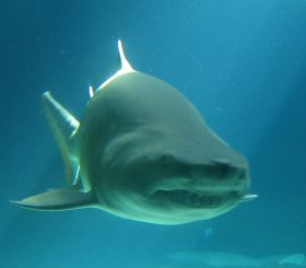L'euristica della disponibilità: uccidono più gli squali o le malattie?