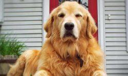 DogVacay, l'Airbnb per i cani