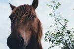 La parabola del cavallo morto
