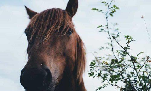 La parabola del cavallo