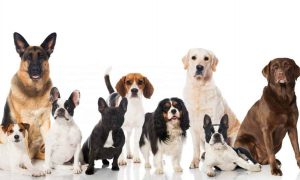 cani in vacanza pet sharing