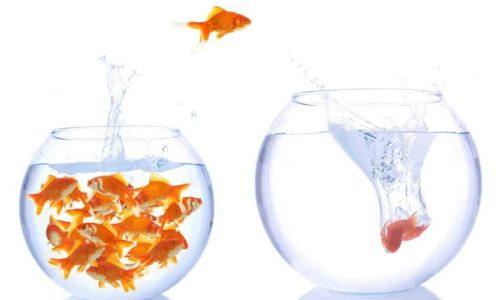 pesciolino rosso che salta in una boccia di vetro